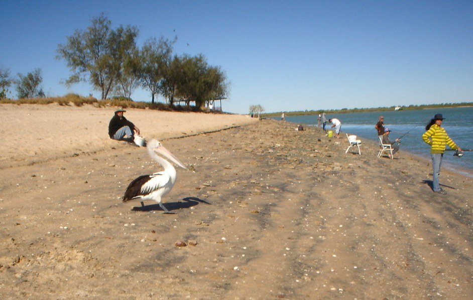 Pelican Waiting for a Feed Karumba Point Sunset Caravan Park