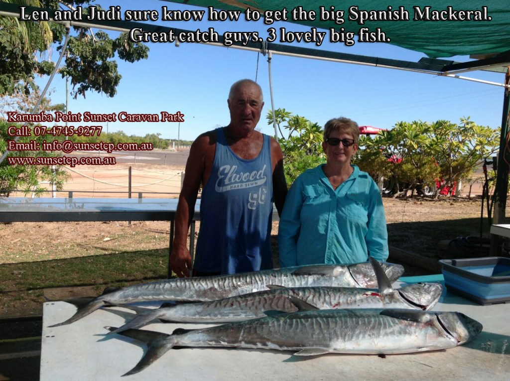 Spanish mackerel is truly one of the greatest pelagic in for Fat guy fishing