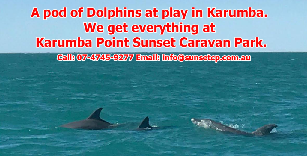 A pod of Dolphins at play in Karumba. We get everything at Karumba Point Sunset Caravan Park.