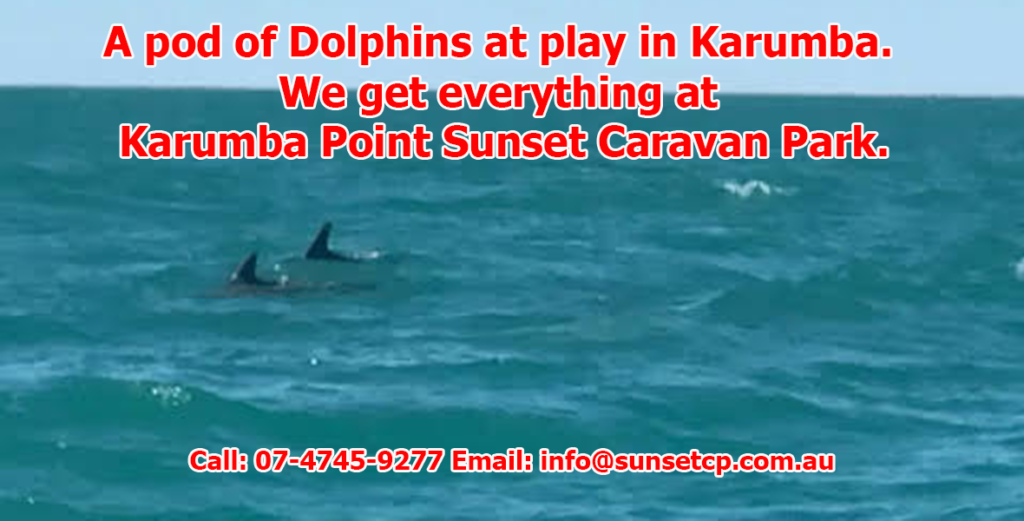 A pod of Dolphins at play in Karumba. We get everything at Karumba Point A pod of Dolphins at play in Karumba. We get everything at Karumba Point Sunset Caravan Park.Sunset Caravan Park.