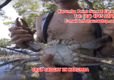 Crab Caught in Karumba While Guest Stayed at Karumba Point SunseCrab Caught in Karumba While Guest Stayed at Karumba Point Sunset Caravan Parkt Caravan Park