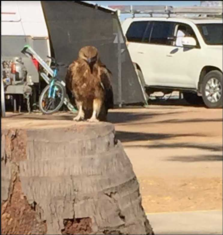 We get many visitors at Karumba Point Sunset Caravan Park.They just love to pop in for a chat.