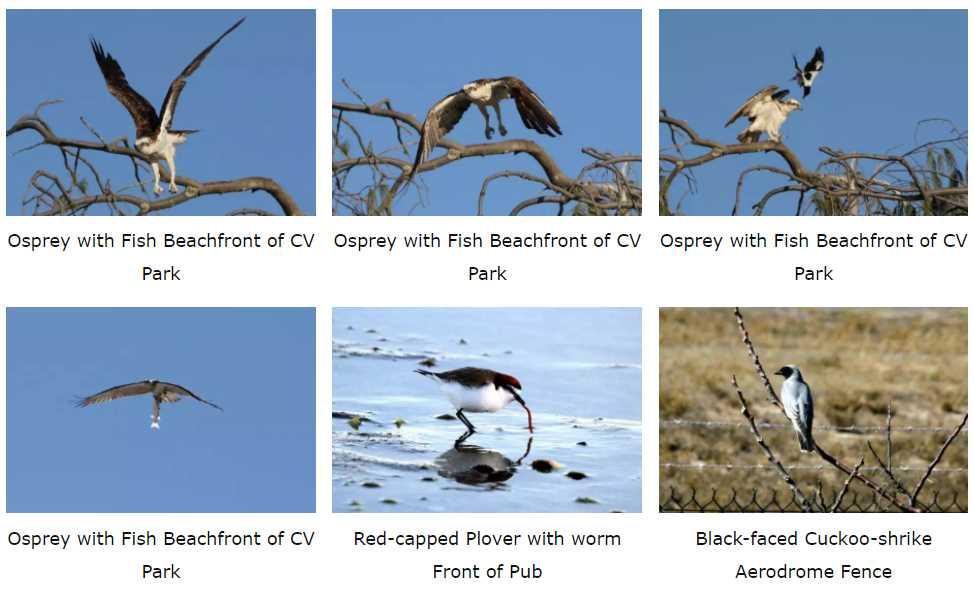 Karumba Point Sunset Caravan Park Wildlife Birds