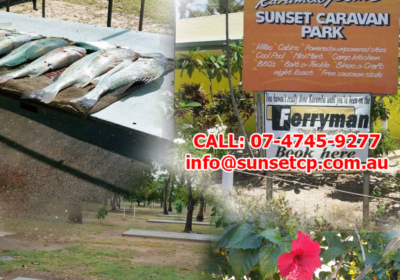 Karumba Point Sunset Caravan Park Tropical Plants Swimming Pool Fishing Birds