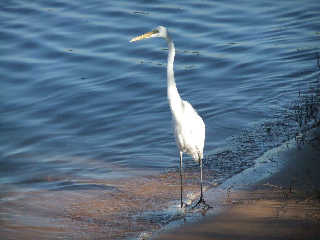 Birds in Karumba