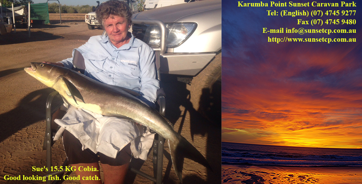 Sue's 15.5 KG Cobia. Good looking fish