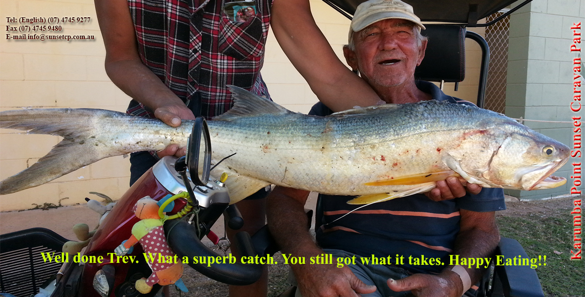 Well done Trev. What a superb catch. You still got what it takes karumba point sunset caravan park accommodation cabins hotels fishing birds wild life queensland qld online direct booking book now