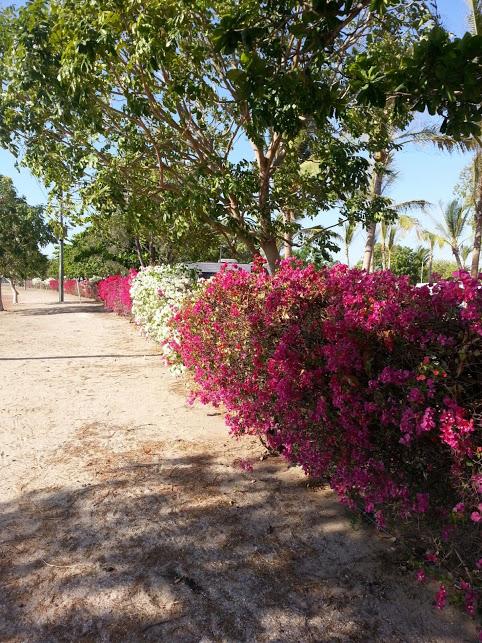 Flowers KKarumba Point Sunset Caravan Park