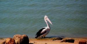 14 Karumba Point Sunset Caravan Park Accommodation Hotels Fishing Birds Outback Near to Sea