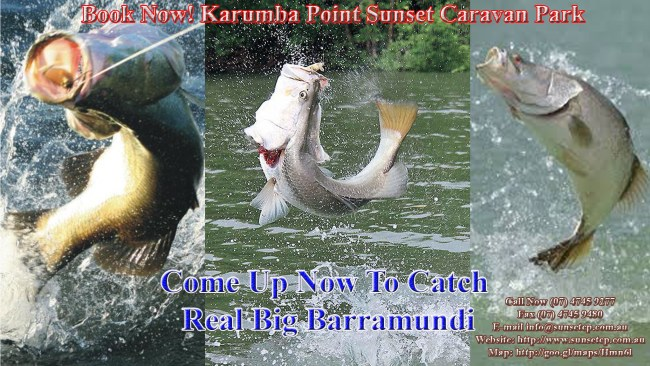 Flying-Barramundi-Fishing-Karumba-Point-Sunset-Caravan-Park