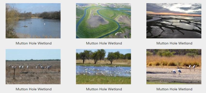 Mutton-Hole-Wetland66