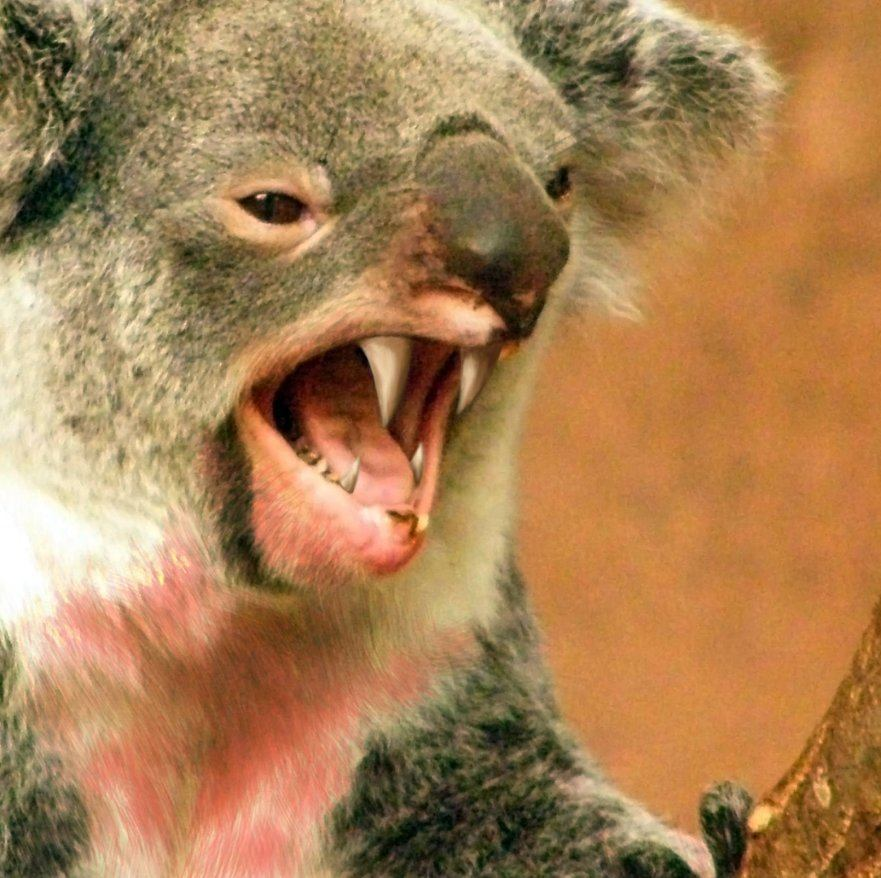 Don't Believe Stories of Drop Bears Photo (C) Atrists Rendering From Wikipedia
