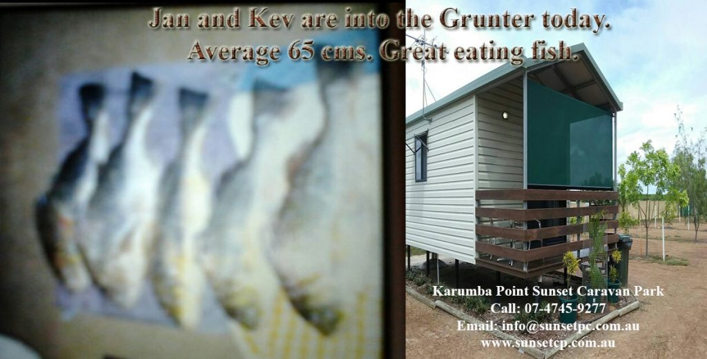 Jan and Kev are into the Grunter today. Average 65 cms. Great eating fish.