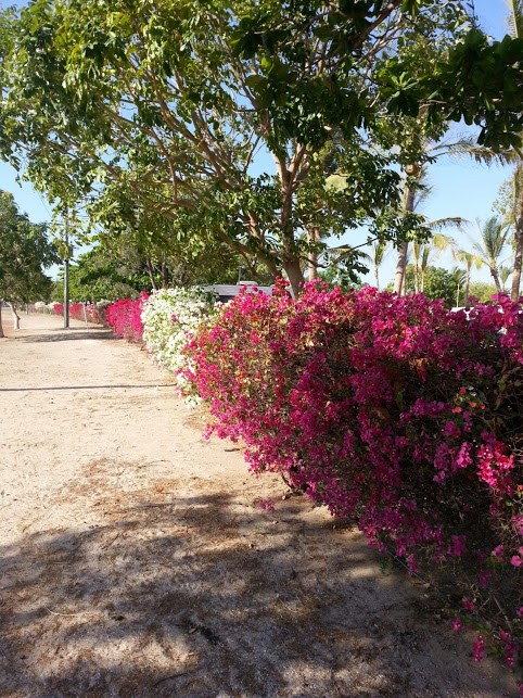 Flowers Karumba Point Sunset Caravan Park