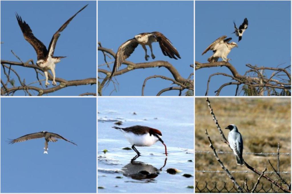 013-karumba-point-sunset-caravan-park-birds-life