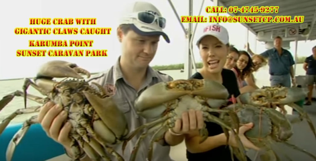 Huge crab with gigantic claws caught in Karumba