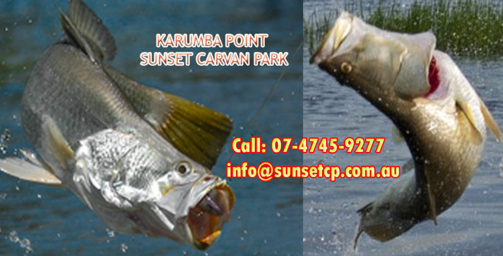 BIG Barramundi Catch Karumba Tourist Attraction Fishing Competition