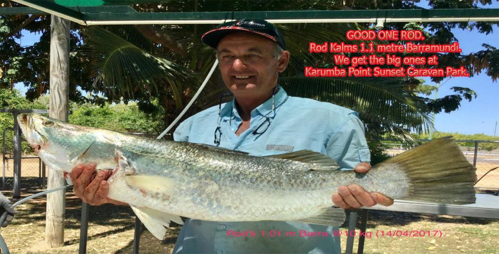 GOOD ONE ROD. Rod Kalms 1.1 metre Barramundi. We get the big ones at Karumba Point Sunset Caravan Park.