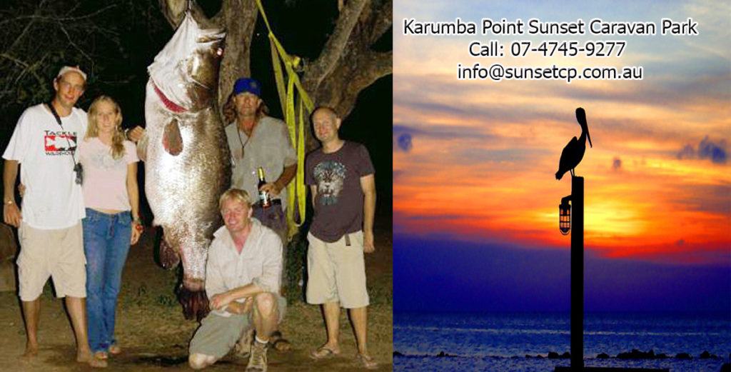 Giant Barramundi Caught Karumba Point Sunset Caravan Park