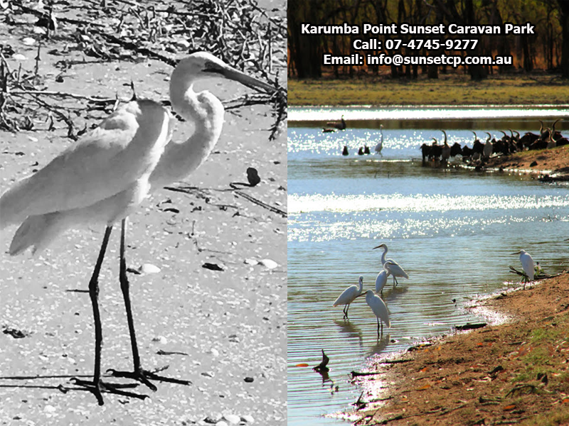 Karumba Point Sunset Caravan Park Wildlife, Sunset View, Birds