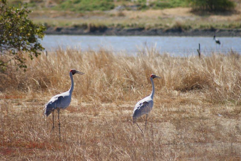 Karumba Landscape Tourist Attraction Tropical North Karumba Queensland