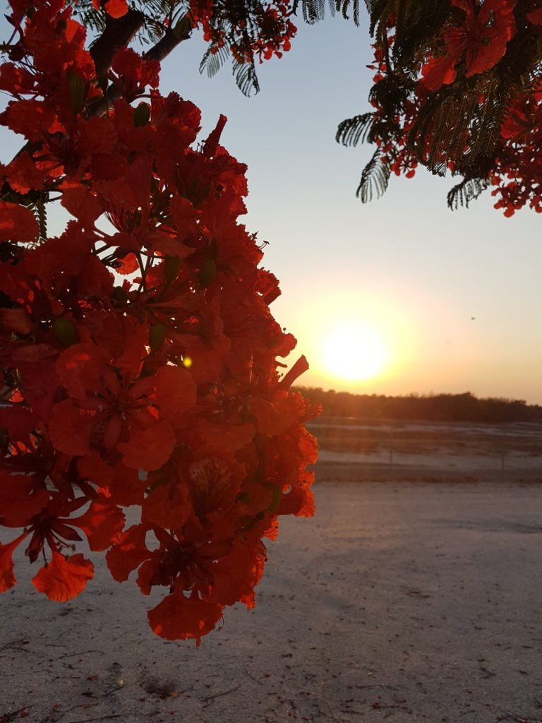 Karumba Point Sunset Caravan Park Beautiful Flowers Sunset View