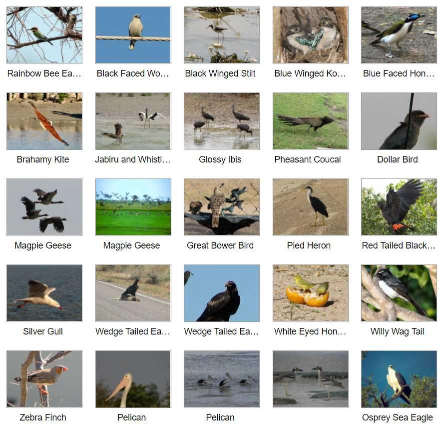 Birds in Karumba Visit Karumba Point Sunset Caravan Park