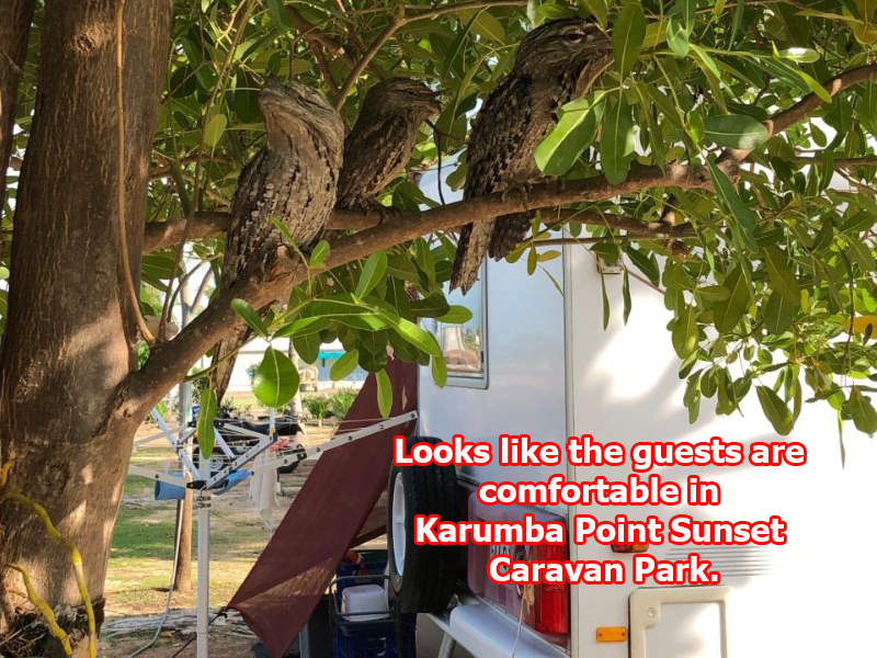 Looks like the guests are comfortable in Karumba Point Sunset Caravan Park