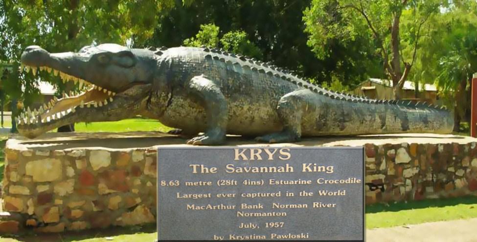 KRYS The Savannah King